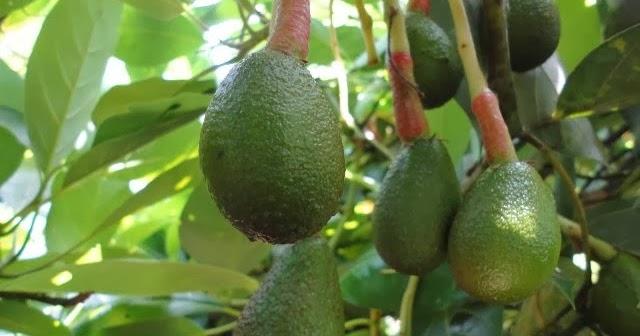 Mantienen en funcionamiento vivero forestal frut cola y for Proyecto vivero ornamental