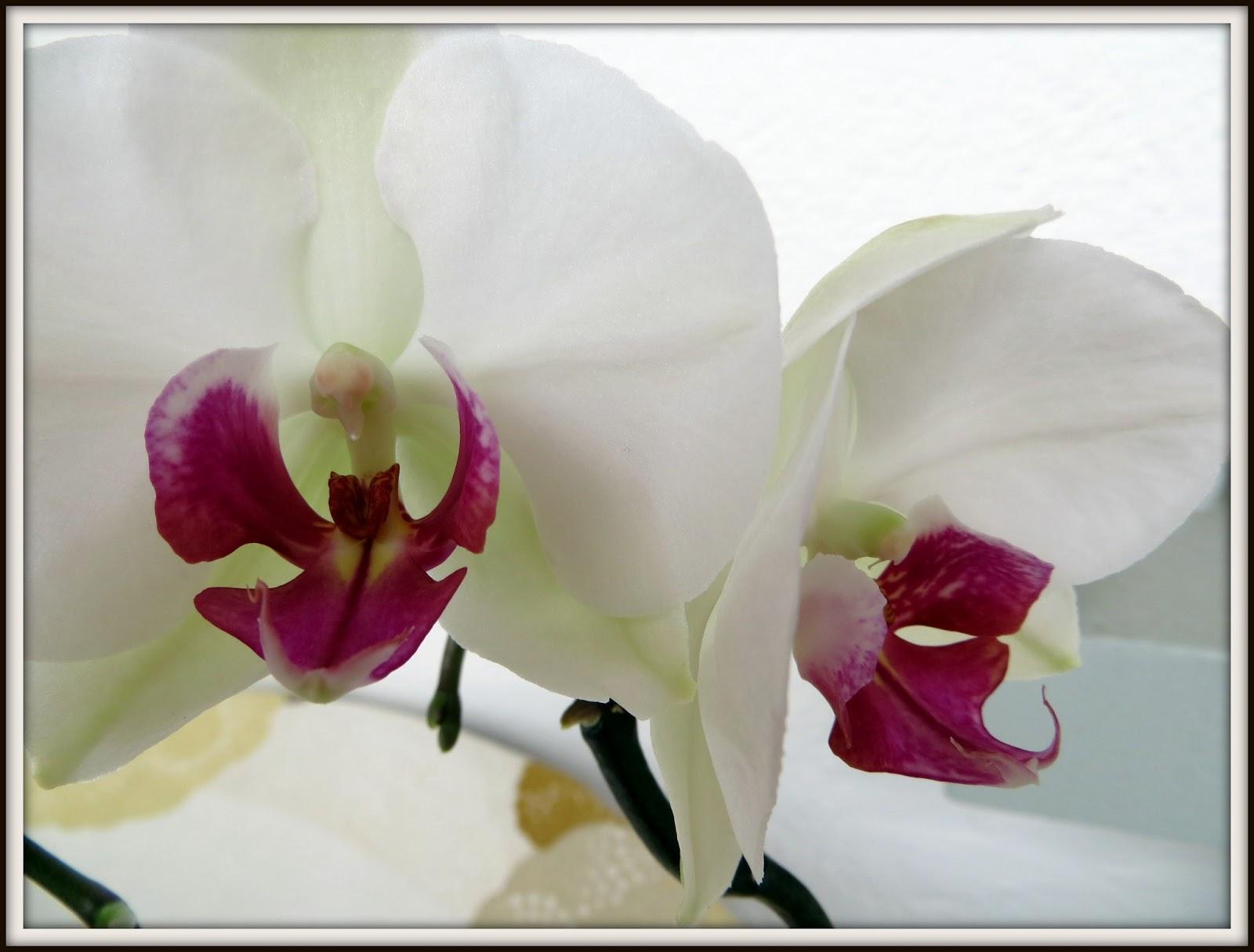 das leben ist bunt orchidee und keine nelke. Black Bedroom Furniture Sets. Home Design Ideas