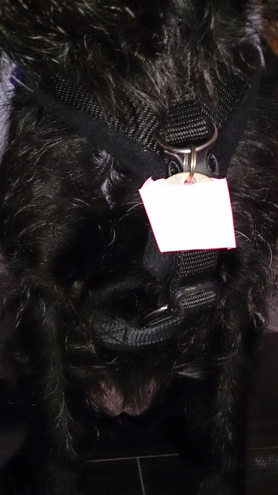dog games shop ltd perfect fit harness dogs cats pigs tri-paw collar lead fleece lined comfortable