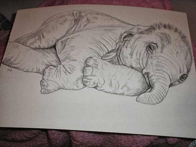 -Baby Elephant