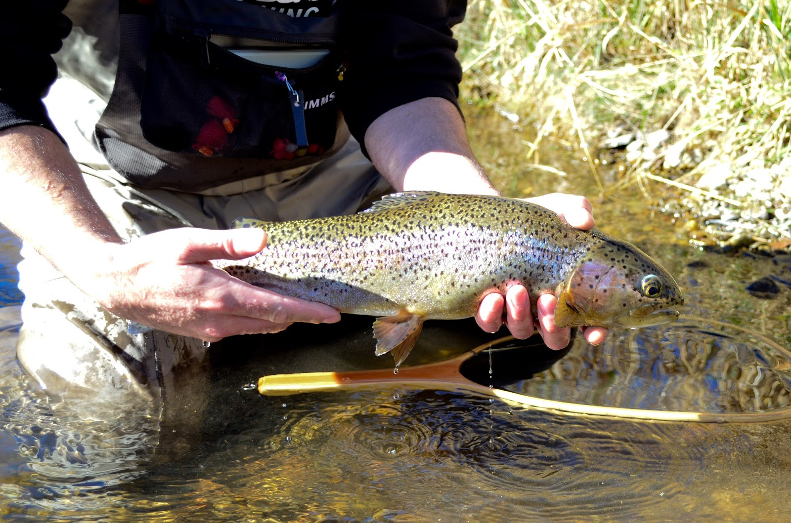 Shot gun the answer to your split shot problems for Fly fishing split shot