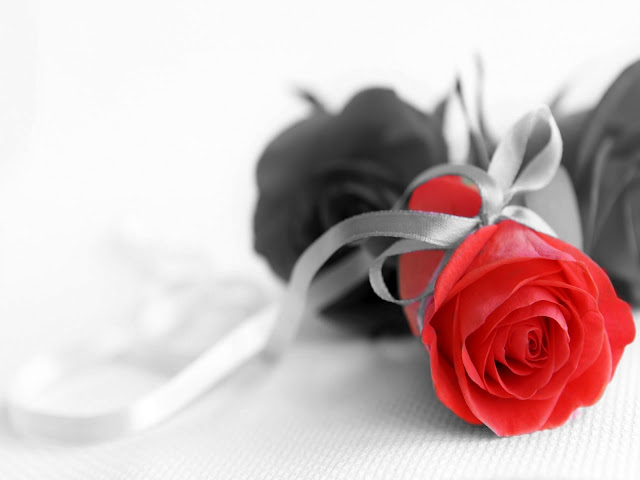 Red Rose Black and white with Color Pictures