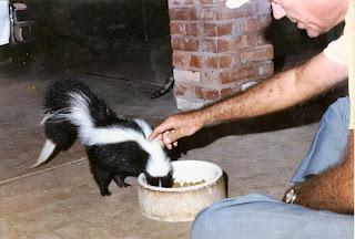 ملف كامل عن اجمل واروع الصور للحيوانات  المفترسة   حيوانات الغابة  426854055_1480e0fddc