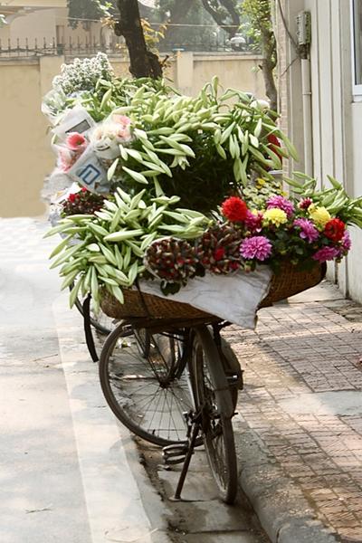 Hình ảnh hoa đẹp - Hoa loa kèn 04