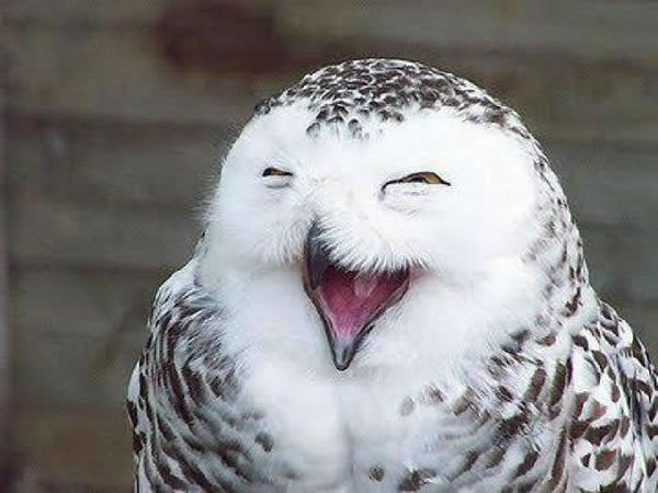 Burung hantu senyum