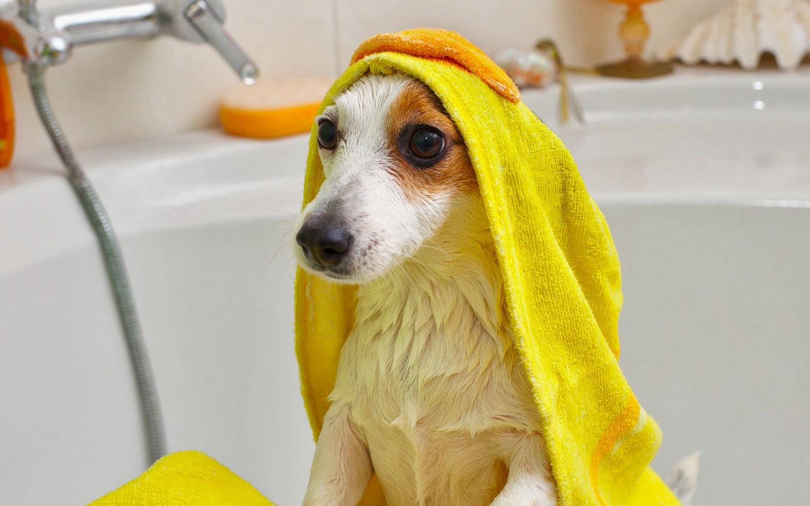 handdoek met dieren
