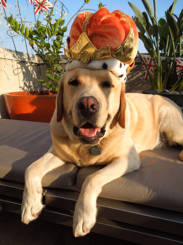 Labrador royalty