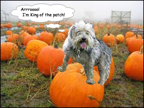 r pumpkin+patch+(Gizmo) Happy Howl O Ween!
