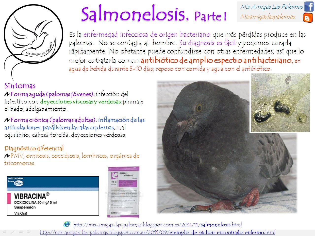 Mis amigas las palomas: Ejemplo de pichón encontrado enfermo