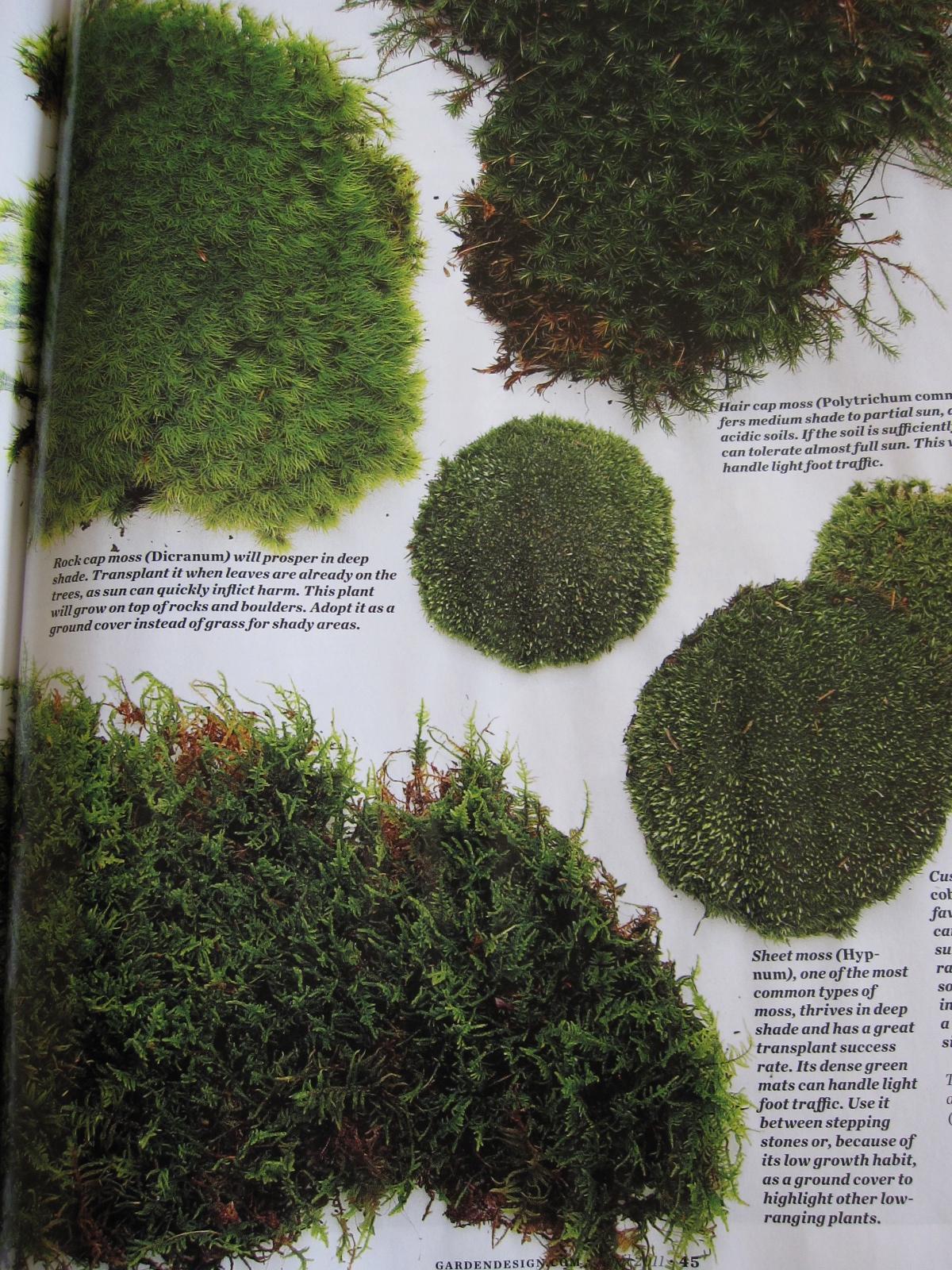 Moss Mats Mulchmaid Moss Garden Dreams