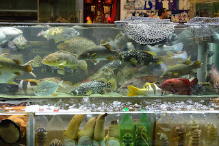 Fish in tanks at Chuen Kee seafood in Hong Kong