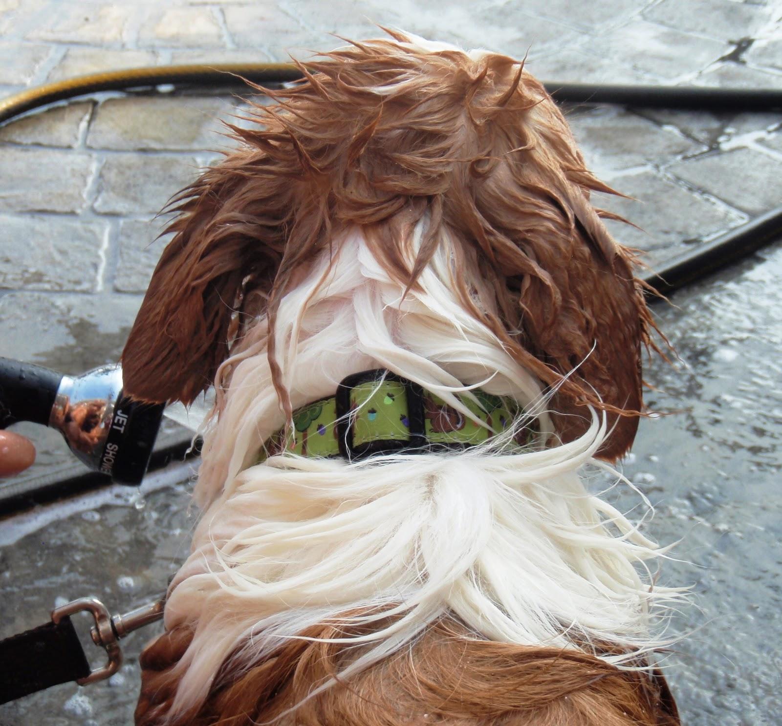 Hiding Dogs Ears