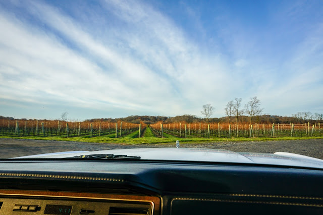 Macari Vineyard- Long Island- NY