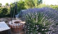 Albacete-jardín-botánico