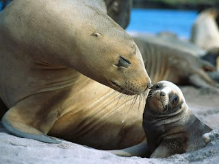 Foca hembra con su cría bebé