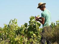 Cuidant les vinyes