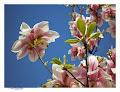 ..Frühlingshafte Momente...