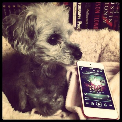 Murchie lays in a small, fuzzy-sided dog bed. A bookshelf appears behind him. Beside him is a white iPod with The Ghost Bride's cover on its screen. The cover depicts a Malay woman laying on a bower of something red. The edge of the cover cuts her off just below her eyes.