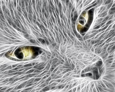 cat wallpapers. Windows 3D Cat Wallpaper