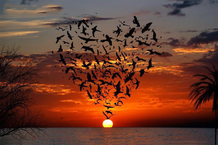 Красивые Фото Про Любовь