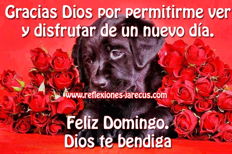 Feliz Domingo - Dios te bendiga