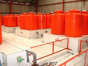 Pabrik Pupuk Cair