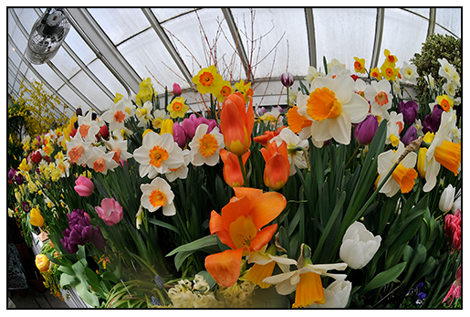 Garden Design Garden Design With How To Plant Bulbs In