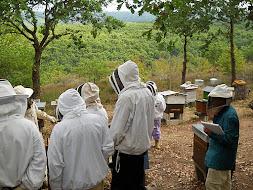 Cours au rucher