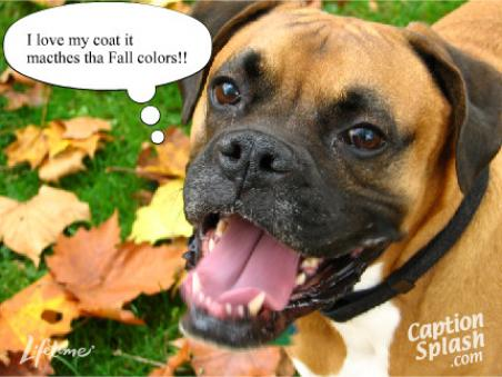 clip art and picture Funny boxer