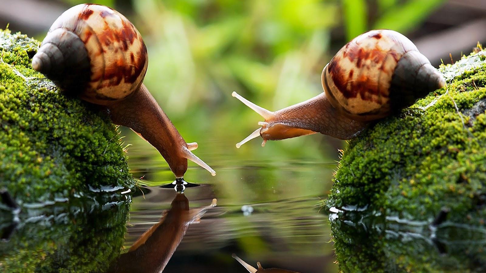 Banco de im genes 12 fotograf as de la naturaleza for Como criar caracoles de jardin
