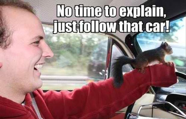 Funny Meme No Caption : Funny animal captions part pics amazing