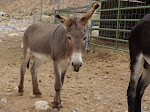 Donkey of the day