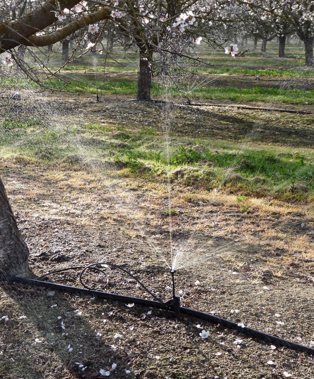 Irrigation nozzle rebates available from pg e california