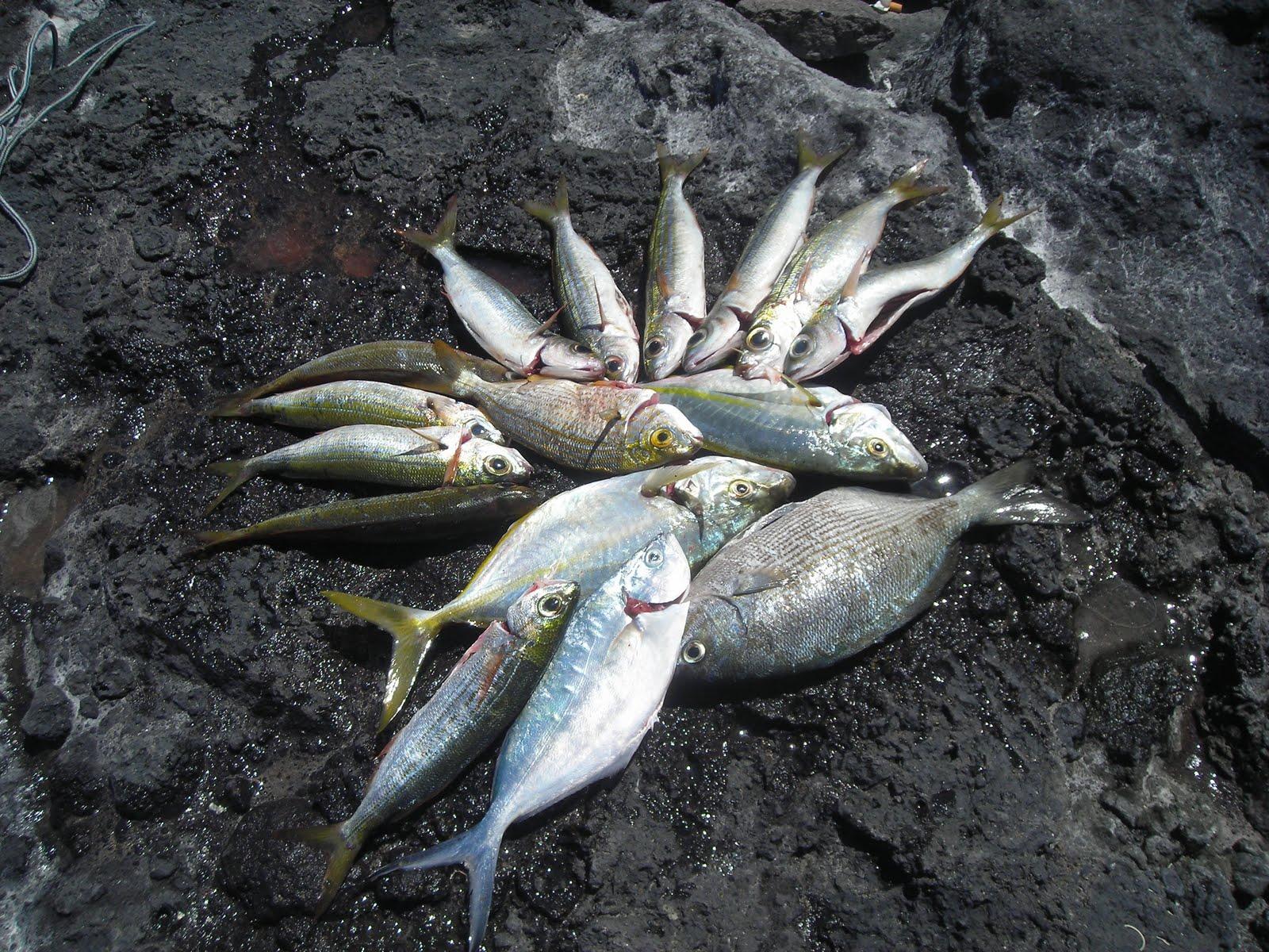 Las horas para la caza y la pesca la revista