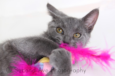 adopt, animal rescue, Blog, cat, kitten, pet photographer, Photographer, Photography, Virginia photographer,