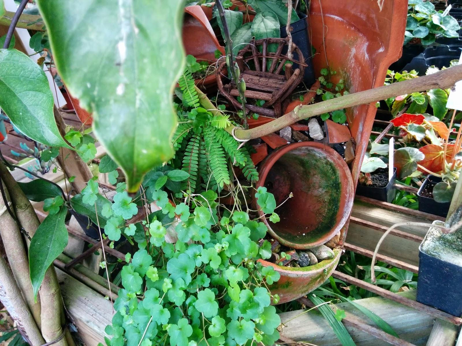 Ruhs News Ct Logees Greenhouse