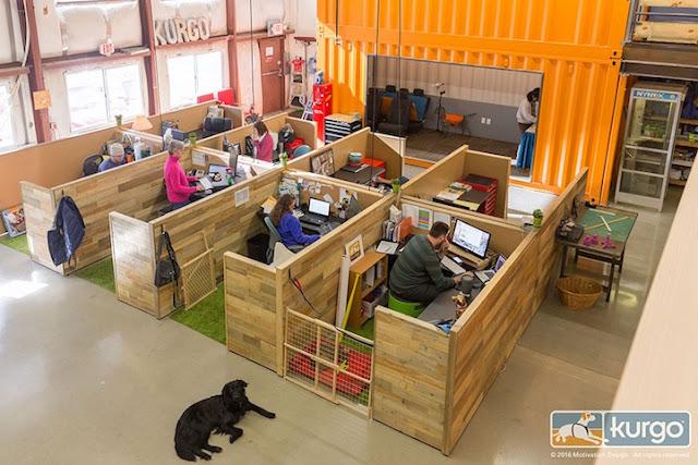 Startup cria design perfeito para funcionários levarem os cães para o trabalho