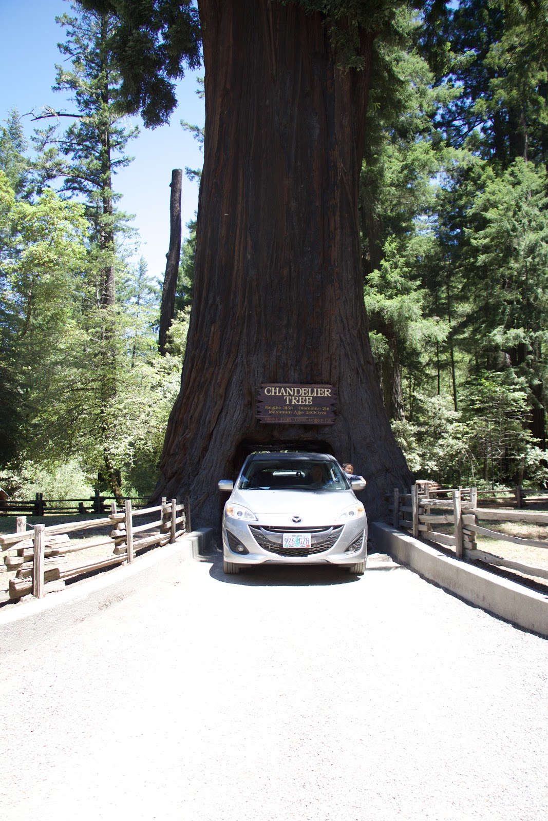 2015 orikasa summer adventure here is daddy and i driving through chandelier tree i got to steer while we went through arubaitofo Gallery