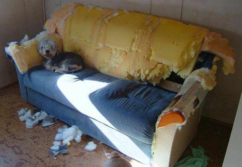 Fotos de perros en situaciones graciosas