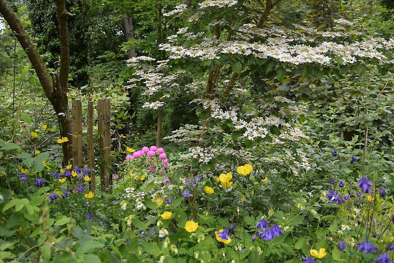 En nog een mooie tuin.