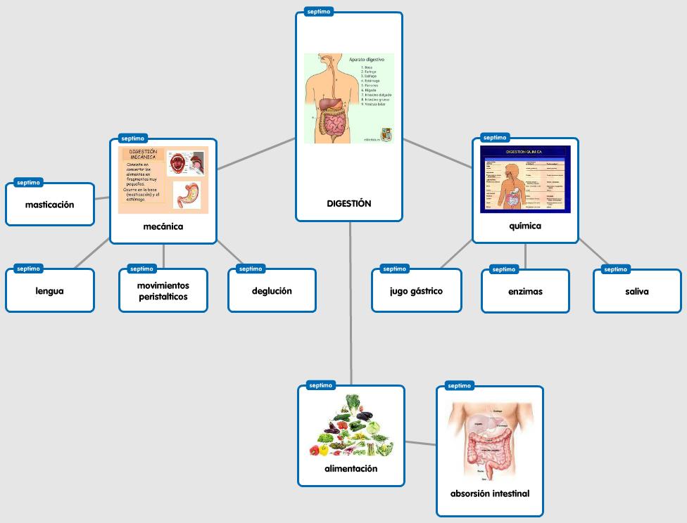 Mappa: la digestione