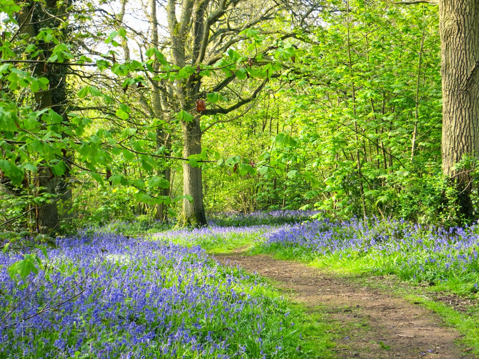 Steder å besøke - Ting å gjøre i Oxford - Oxfordshire