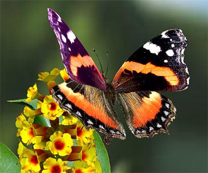 Transmutation..... à la recherche de la paix intérieure ..... ( 4 ) - Page 14 Diaporama,+conf%C3%A9rence,++patrick,+b%C3%A9cavin,+animation+culturelle,+loisirs,+intervention,+conf%C3%A9rences,+conference,+fleurs,+papillon,+papillons,+fleur,+nature,+conf%C3%A9rencier