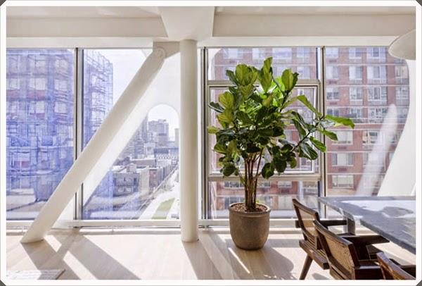 Jenis Tanaman Hias yang Cocok untuk Ruang Apartemen