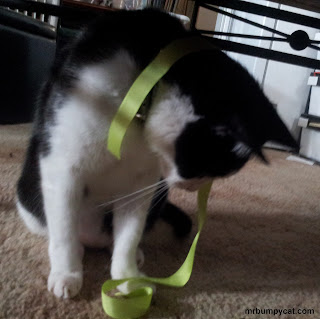 Mr Bumpy cat with green tape around his paw