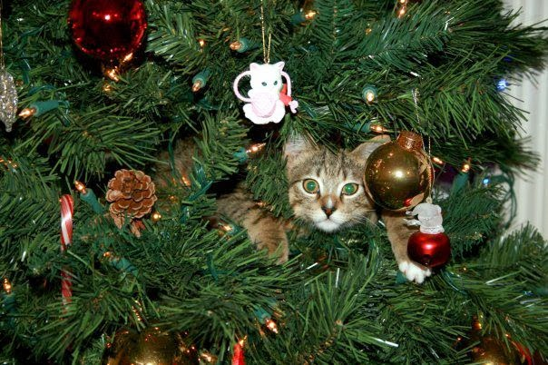 Cat in Christmas tree decorations.