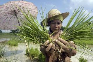 Luzon, Philippines Farmer