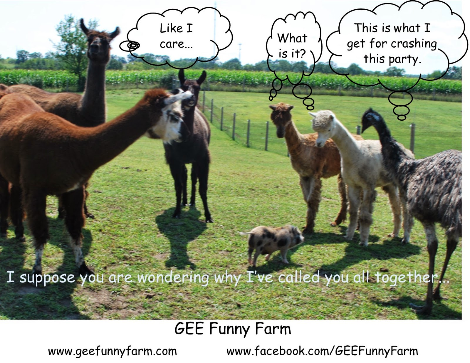 Funny Memes For Tuesday : Gee funny farm: gee funny farm memes