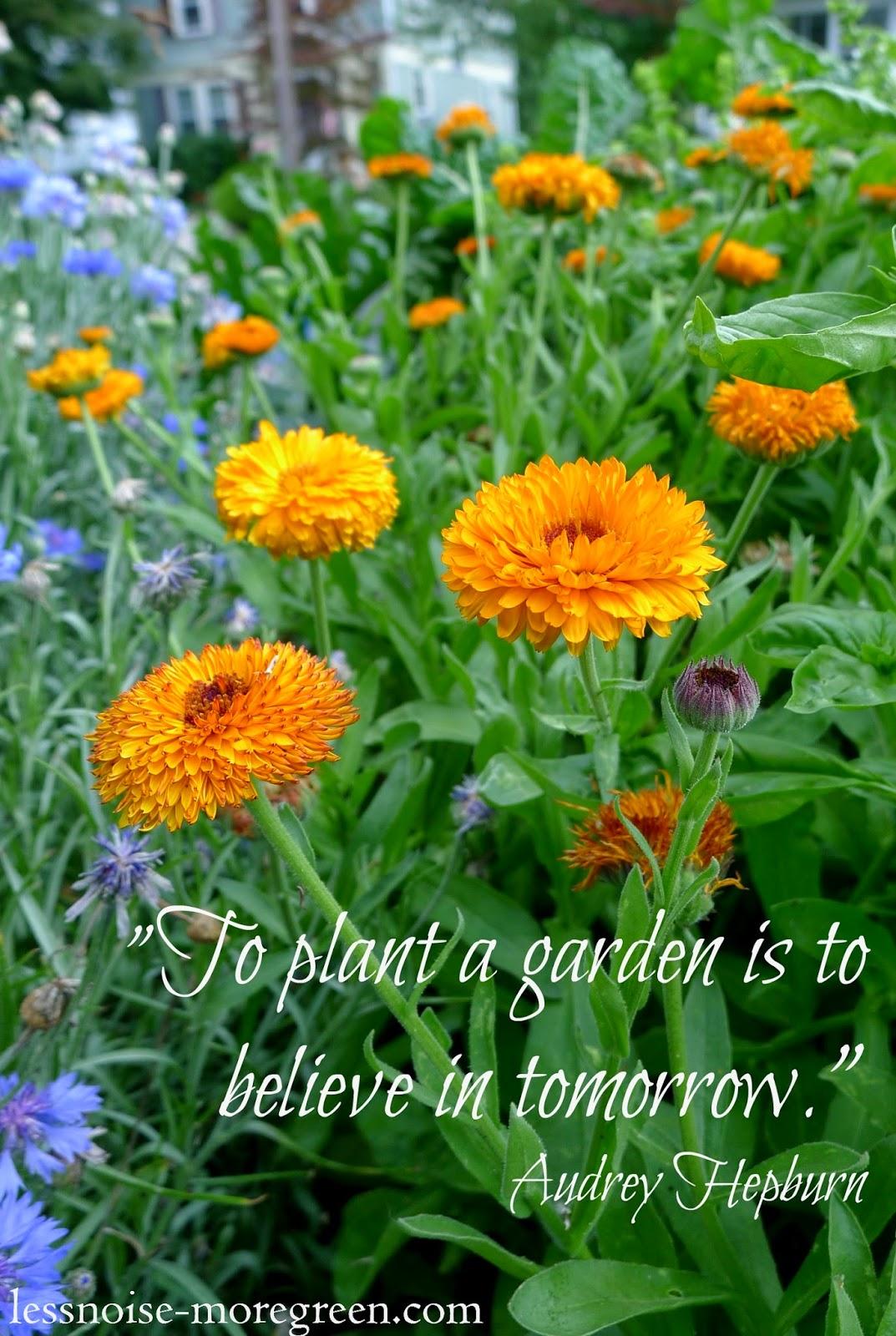 To plant a garden is to believe in tomorrow, Audrey Hepburn quote, gardening quote