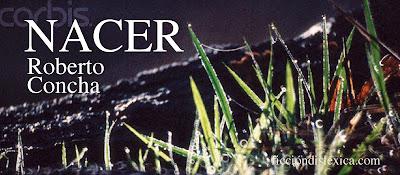 imagen de cesped fresco creciendo con el título de la obra Nacer, poesía por Roberto Concha @RobertoConchaR del blog ficciondislexica.com